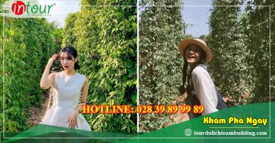 Tour du lịch Hải Dương - Phú Quốc 4 ngày 3 đêm