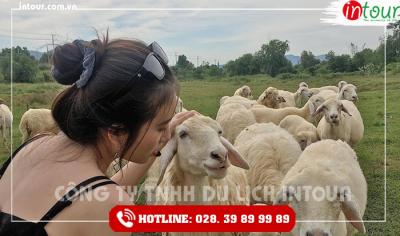 Tour du lịch Teambuilding Đồng Nai - Long Hải 1 ngày